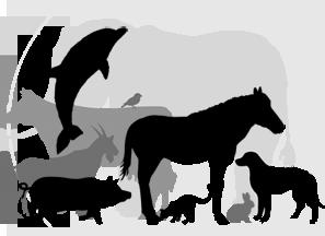 Vet Animals.png