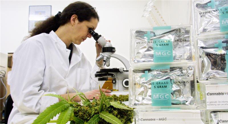File:Canna Lab Lady at Microscope.jpg