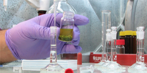 Cannabis-lab-potency-test.png