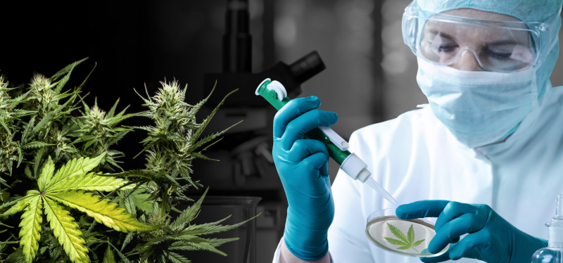File:Cannabis Scientist.png