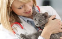 Vet with Cat.jpg