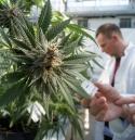 Cannabis Testing Lab1.jpg